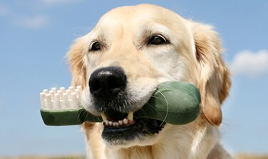 Dental Care - Syosset Animal Hospital