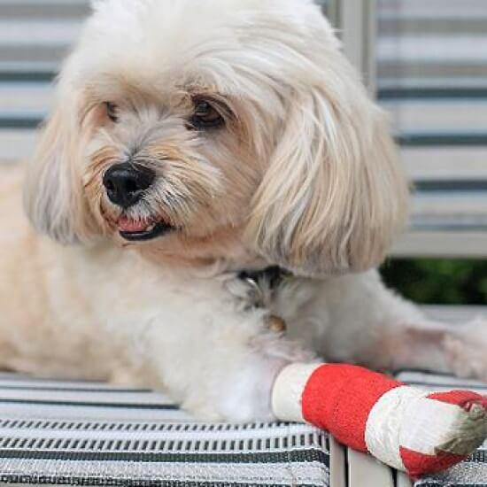 Pet Surgery - Aztec Animal Clinic