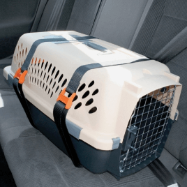 A small pet carrier can work well for cats and small dogs. Remember to make sure it is securely attached to the vehicle to prevent it becoming a projectile object in the event of an auto accident