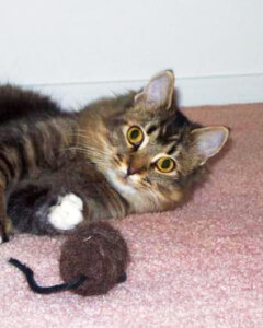 Most young cats seem to enjoy stuffed toys that can be attacked. Adding catnip to the toy may increase the cat's interest.