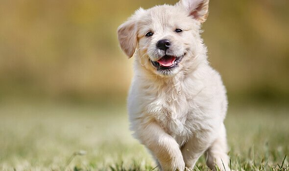 Puppy Preschool and Socialization - Syosset Animal Hospital