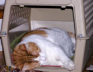 cat-scared-vet2-300x232