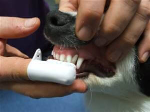 dog-brushing-teeth