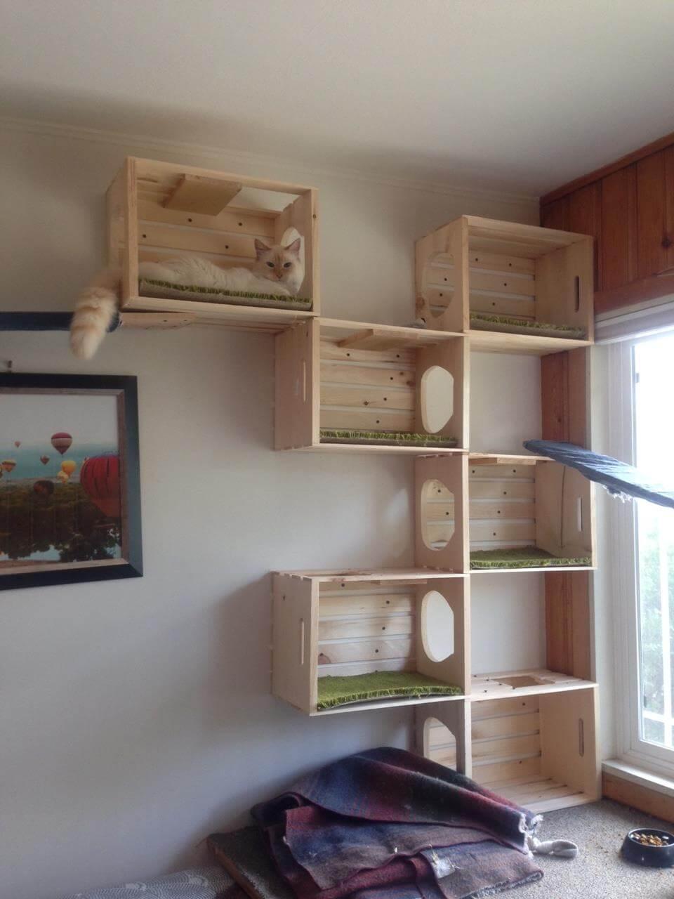 Indoor Or Outdoor Aztec Animal Clinic