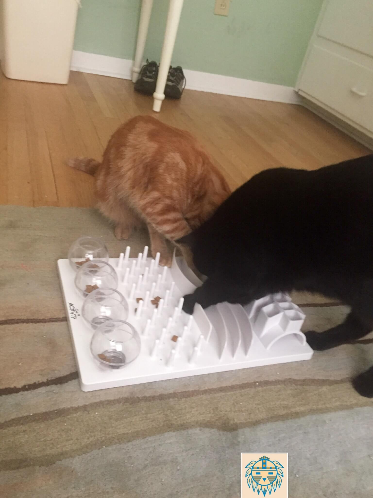 Make feeding time last longer by adding a food station to your cats meal time.  Mischief on the left is using the Catit senses 2.0 digger for cats, while Finn on the right is demonstrating how to use the Northmate Catch Interactive feeder for cats.  Both are available from Amazon or other retailers