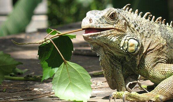 aztec animal clinic exotic animal care