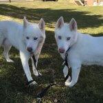 Alaska & Max