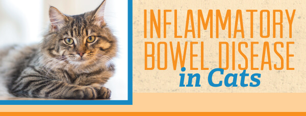 Inflammatory Bowel Disease In Cats Aztec Animal Clinic