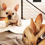 Penelope and Watson